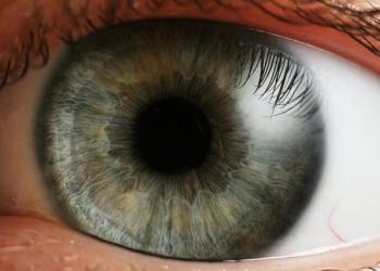 Die Masken für die Augen aus oblepichowogo die Öle
