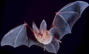 Warum Schlafen Fledermäuse Kopfüber
