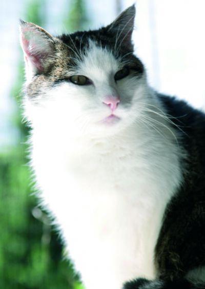 Warum putzen sich Katzen so häufig?