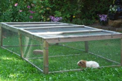 meerschweinchen worauf muss man beim k fig achten. Black Bedroom Furniture Sets. Home Design Ideas
