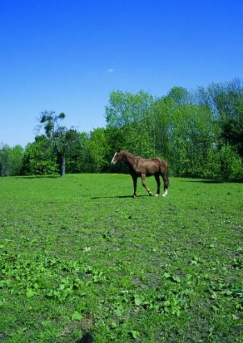 wie schnell kann ein pferd rennen