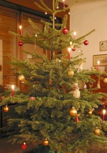 Weihnachtsbaum lange frisch halten